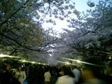 20090406上野公園2