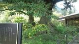 20100503吉川英治椎の木