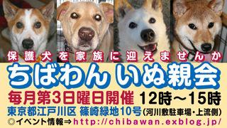 chibawan_teiki_inuoyakai320x180