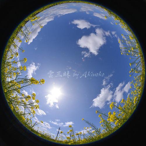 20200414 菜の花Cu 180fisheye DSC_6922