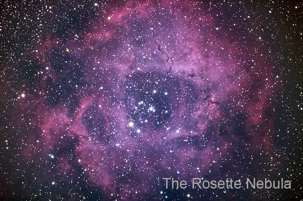 20191106_Rose_SI8_PS_1000pix