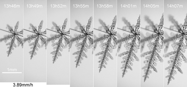 20200417 樹枝 13h46-14h07m 成長過程 統合・調整ネーム入り