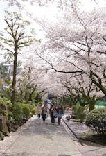 日本大学短期大学部食物栄養学科@春