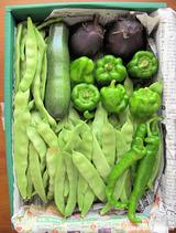 「なつはな畑」の夏野菜ギフト