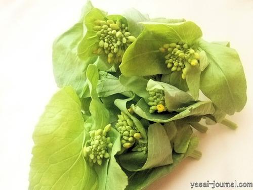 ハクサイの菜の花