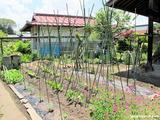 庭の「なつはな畑」2012.6