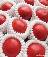 てっぺんトマト@NHK学園「まるごとトマトを大解剖」