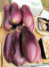 信州の伝統野菜「ていざなす」