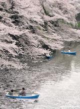 桜の海を漕ぐ2