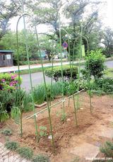 裏庭のトマト畑