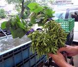 メタボな枝豆。