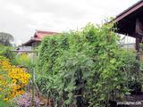 庭の「なつはな畑」