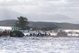雪んこ人参収穫圃場