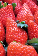 多田さんの一番採り苺2011