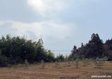 雪のオリーブ畑