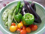 我が家の野菜813