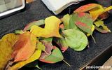 葉っぱのドリンクチケット