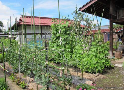 6月の庭の畑