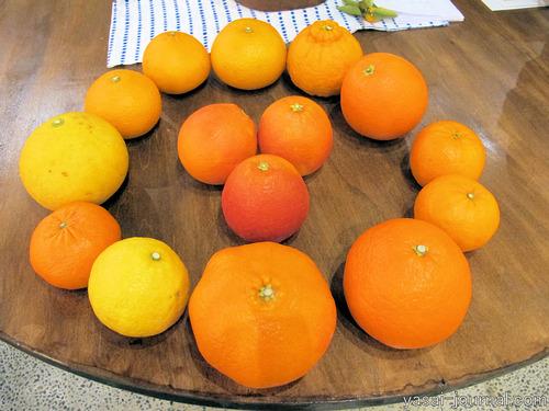 柑橘食べ比べ祭り