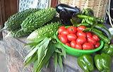 大きな野菜たち