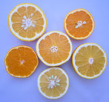 柑橘カタログ カット面
