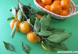 野菜ソムリエサミット「温州みかん」