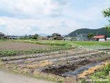 三角の「なつはな畑」2012.6