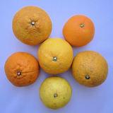 柑橘カタログ 上