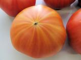 金筋トマト