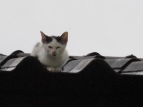 屋根の上のネコ1