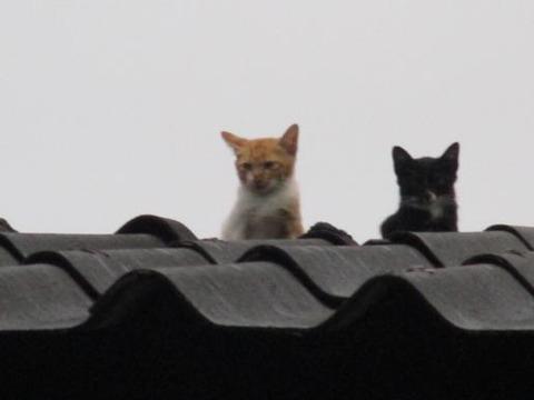 屋根の上のネコ2