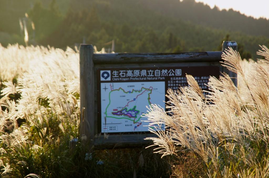 生石高原の日の入り 黄金色に輝くススキ : クピの蒼い風