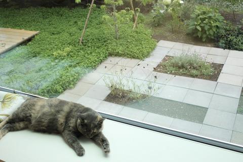 窓からの景色、庭と猫さん。
