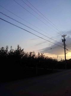 01_幸水の収穫20140909_08