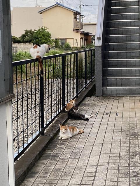【画像】ワイのマンションがノラネコに占拠されてアジトと化しとるんやが…