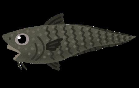 fish_ibarahige