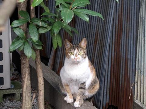 猫「うわあ水溜りがあるにゃ 濡れたくないにゃあ…」 →