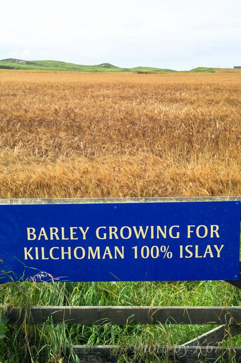 100islay_barley