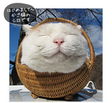 main_cat