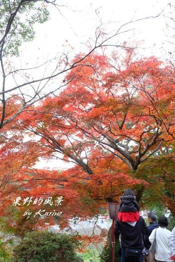 東行庵16_03