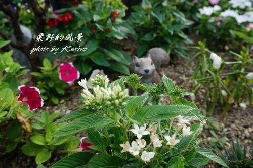 花と小動物03