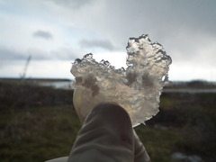 鮭鼻軟骨2