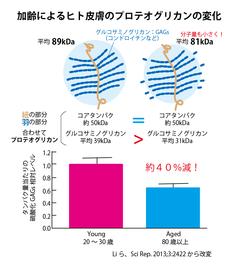 加齢によるヒト皮膚PGの変化