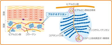 proteoglycan