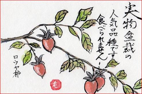 絵手紙・ローヤ柿キャプチャ