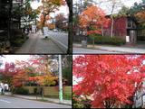 ?ー旧軽井沢の紅葉.JPG