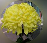 3−黄色.JPG