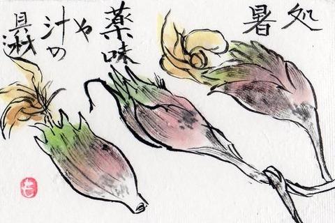 1-絵手紙シリーズ・ミョウガimg047