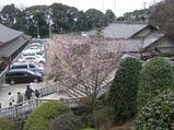 3−犬山成田山の四季さくら.JPG