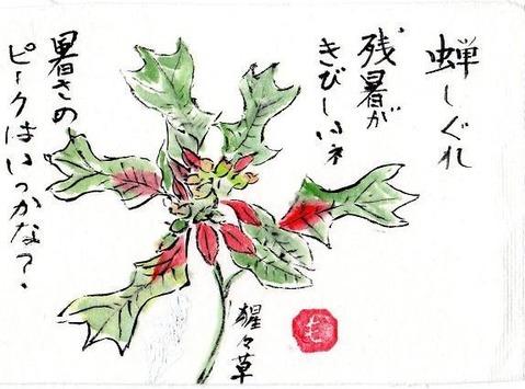 1-絵手紙シリーズ・ショウジョウソウimg043